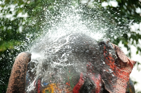 Young elephant playing water in Songkran day in Thailand  photo