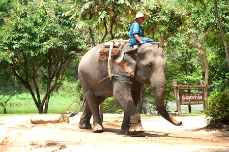 LAMPANG, THAILAND - MAY, 9  The mahout train elephant to stack the log They have show twice in day  In The Thai Elephant Conservation Center  TECC  at Lampang  May 9, 2012 in Lampang, Thailand