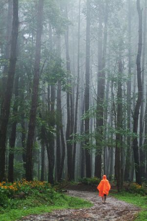 Forest in rainny day in Northern of Thailand  photo