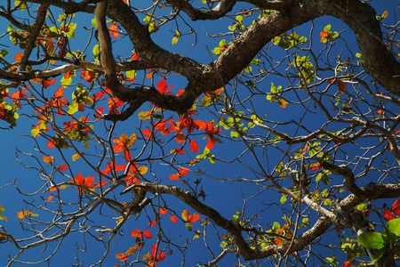 profusion: to shed leaves