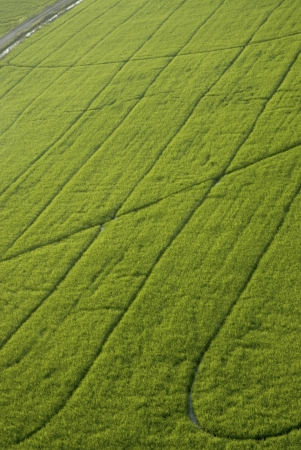 Green fields from the air   photo