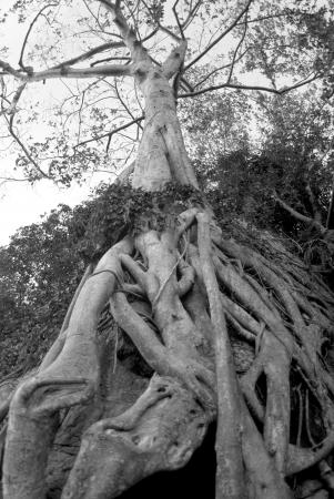 Tree root Stock Photo - 16179233