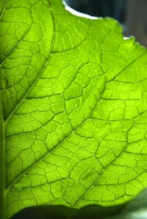 Green leaf texture Stock Photo - 16253253