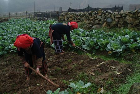 Twin womens working in farm , Vietnam  photo