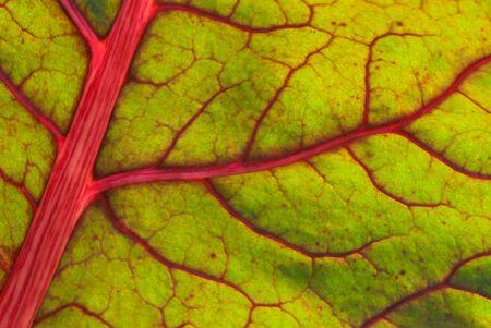 Green Leaf pattern Stock Photo - 16453078