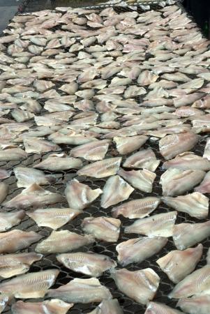 Dry fish texture  Stock Photo - 16502478