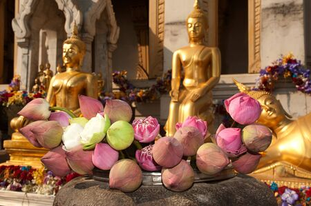 Many Lotus for offerings Buddha in Buddhism ,Thailand  photo