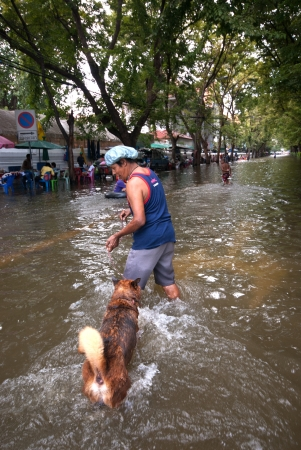 BANGKOK, THAILAND - OCTOBER 31   unidentified People and dogs running in flood water in Bangkok after the heaviest rains in 50 years in Thailand on October 31, 2011 in Bangkok, Thailand