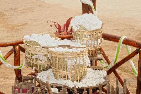 boll: Cotton plantation