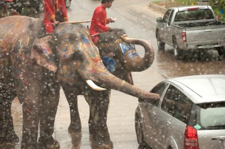 dare soldi: La gente d� i soldi per elefante in Songkran festival