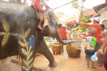 Elephant splashing water in Songkran festival
