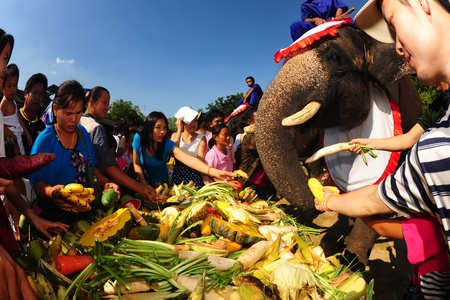 NAKORNPATHOM,THAILAND-MAY 1  Groups of people feed the elephants,joyfully on Fruits buffet Elephants festival on May 1,2013 at Samphan and crocodile farm in Nakornpathom Province,Middle of Thailand
