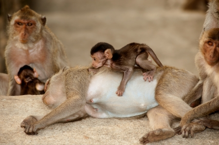 Monkey family in happiness   photo