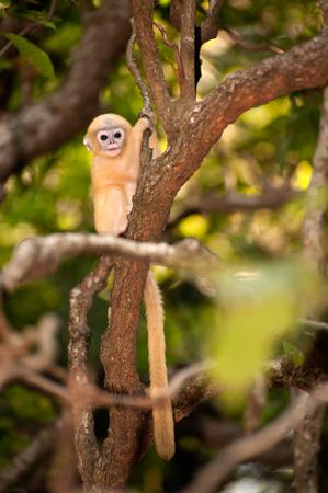 b�b� singe: B�b� singe sur un arbre Banque d'images