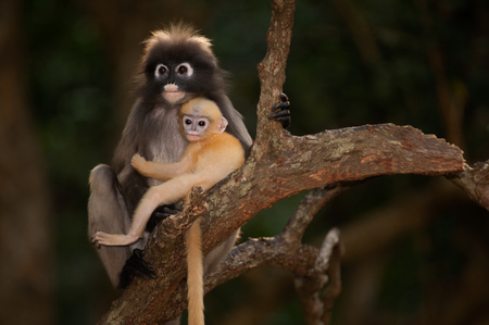 obscura: Monkey mother and her baby on tree trunk Stock Photo