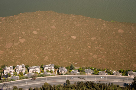 Pollution from aerial in lake,Kunming city,China  photo