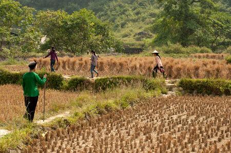 chaff: Farmer walking in a field.