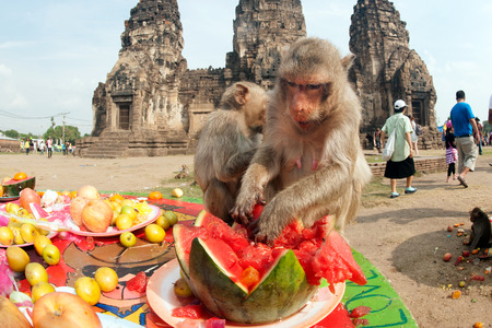 buffet: Thailand Monkey Party (Thailand Monkey Buffet ).