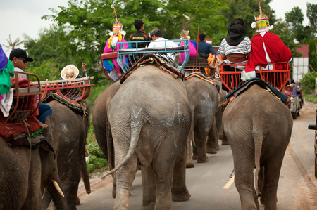 local festivals: Ordination parade on elephants back Festival. Editorial