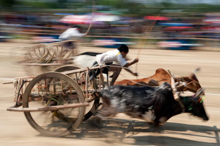 racing festival: Ox cart racing festival in Thailand. Editorial