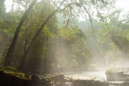oxigen: Deep forest in Khao Yai National park,Thailand.