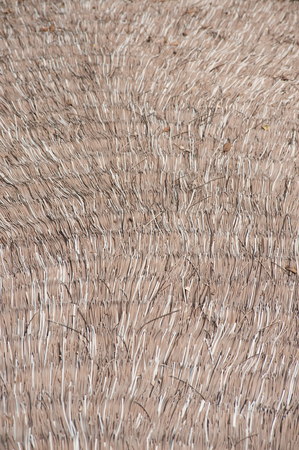 architecture bungalow: Close up dry straw thatch roof of traditional Thai house.