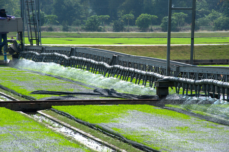 seeding: Watering for seeding rice with automatic.