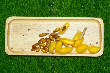 Close up in sect Silkworm on tray. Stock Photo