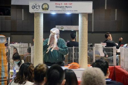 BANGKOK,THAILAND – MARCH 17 , 2018 : Douglas Myers from U.S.A judge health checkers purebred cat that contest on CFA International Asia Cat Show 2018 at Central Lat phrao Department Store.