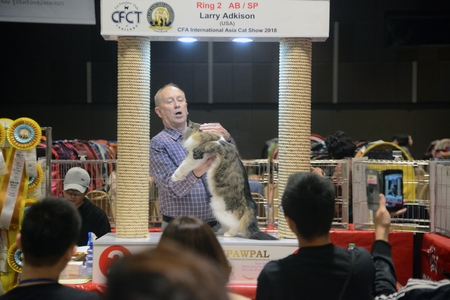 BANGKOK,THAILAND – MARCH 17 , 2018 : Larry Adkison from U.S.A judge health checkers purebred cat that contest on CFA International Asia Cat Show 2018 at Central Lat phrao Department Store.