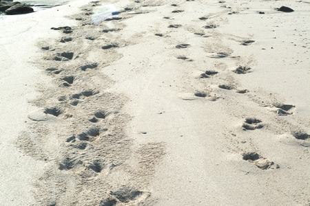Animal footprints on the sand at the beach 免版税图像