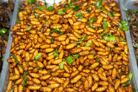 Insect worm, chrysalis, fried chrysalis, fried salt , silkworm, bamboo insect supplement.