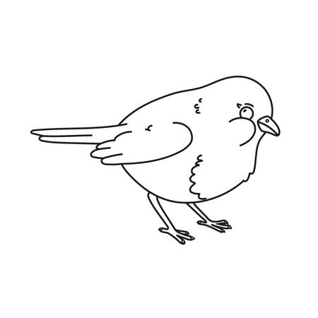 Hand drawn illustration of robin bird.Vector outline illustration. 矢量图像