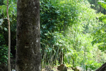 viability: Tree trunks in the forest