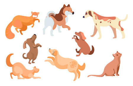 Collection of feline and canine animals. Isolated set of dogs and cats, mammals with furry coat and sports. Furry kitty and puppy. Characters and personages of pure breed, vector in flat style