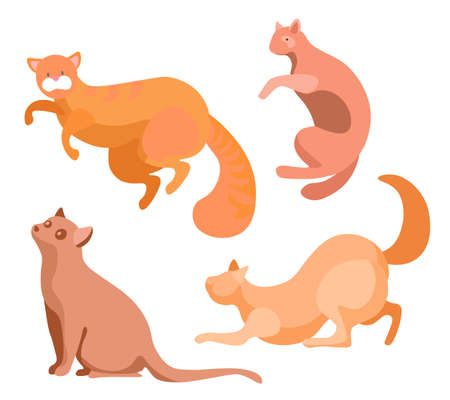 Set of domestic cats isolated beige kittens in different poses. Brown cat with straight ears, playful feline characters flat cartoon style. Vector illustration domestic pets purebred, long hairy tails Stock Illustratie