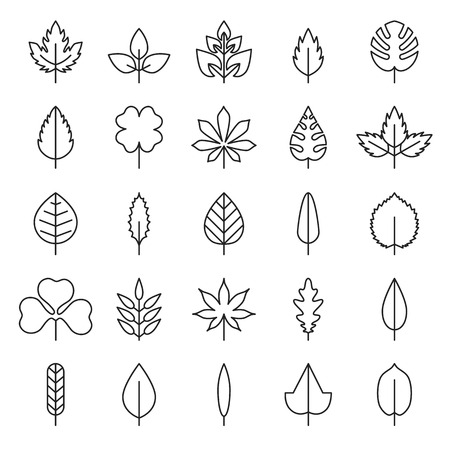 Leaf vector, flora, linear style black contour on a white background