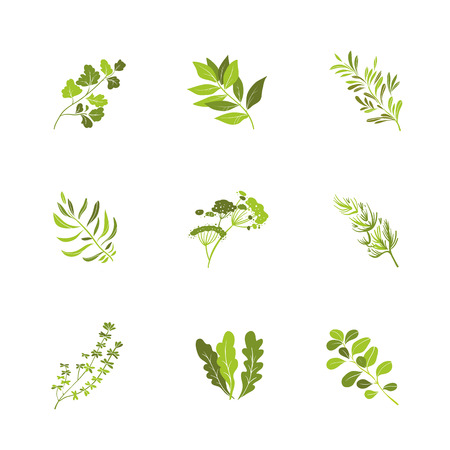 Herbs and spices icons cartoon vector set Vector