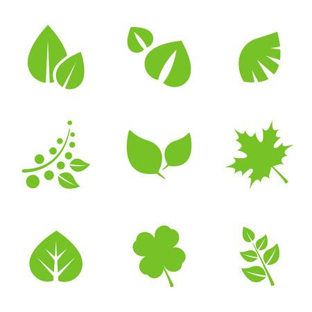 crecimiento planta: Conjunto de hojas verdes elementos de dise�o.