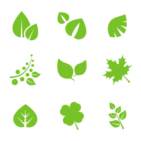 birch leaf: Set of green leaves design elements.