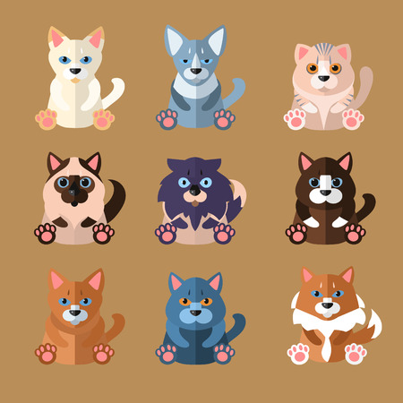 abyssinian: Set of flat popular breeds of cats icons. Vector illustration.