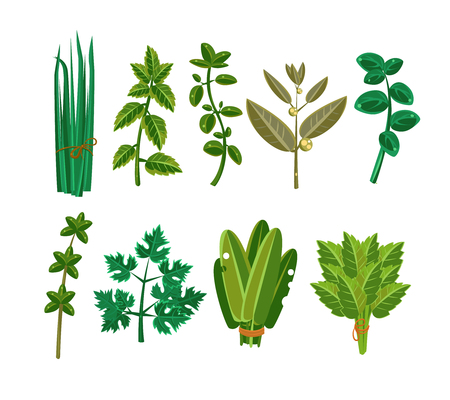 Set of 9 vector herbs, aromatic herbs for seasoning food