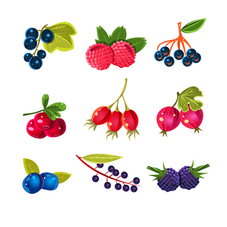 Colorful succose bacche impostato per la progettazione di etichette. Illustrazione vettoriale per un libro di cucina o un menu Vettoriali