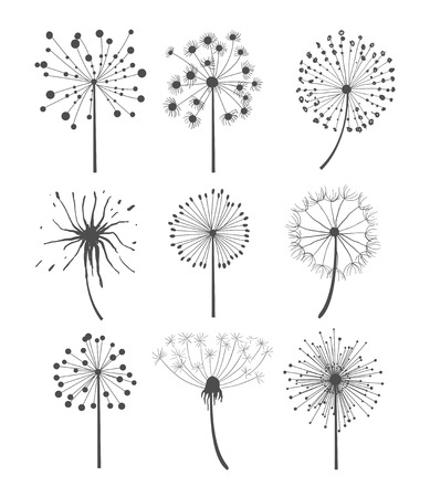 dandelion: Abstract graphic dandelion collection in linear style, vector illustration set