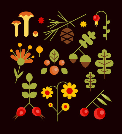 seasonal forest: Autumn seasonal forest elements with oak leaves, acorns, mushrooms and berries. illustration in flat style
