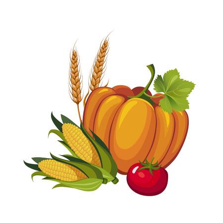 Harvest Pumpkin, Stalks and Tomato, Vector Illustration
