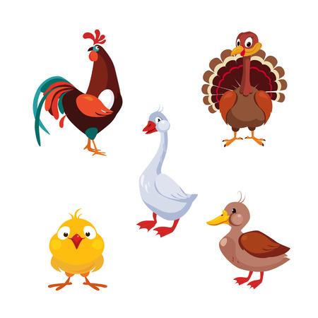 aves de corral: Aves de Corral en aves domésticas, ilustración vectorial Colección Animales de granja Vectores