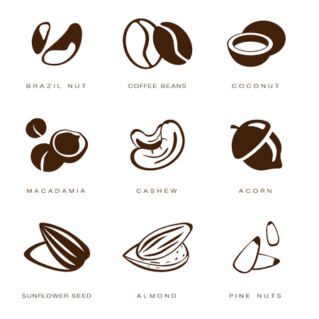 macadamia: Web icons collection nuts, beans and seed vector