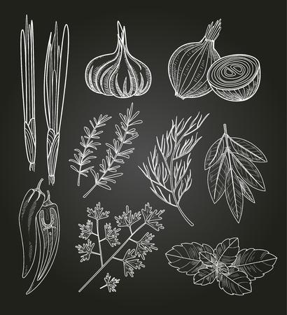 料理用のハーブおよびスパイス。手描きベクトル ビンテージ イラスト。