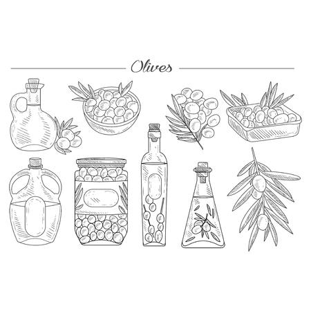 オリーブ オイルは、オリーブの枝の手描きのベクトル コレクション